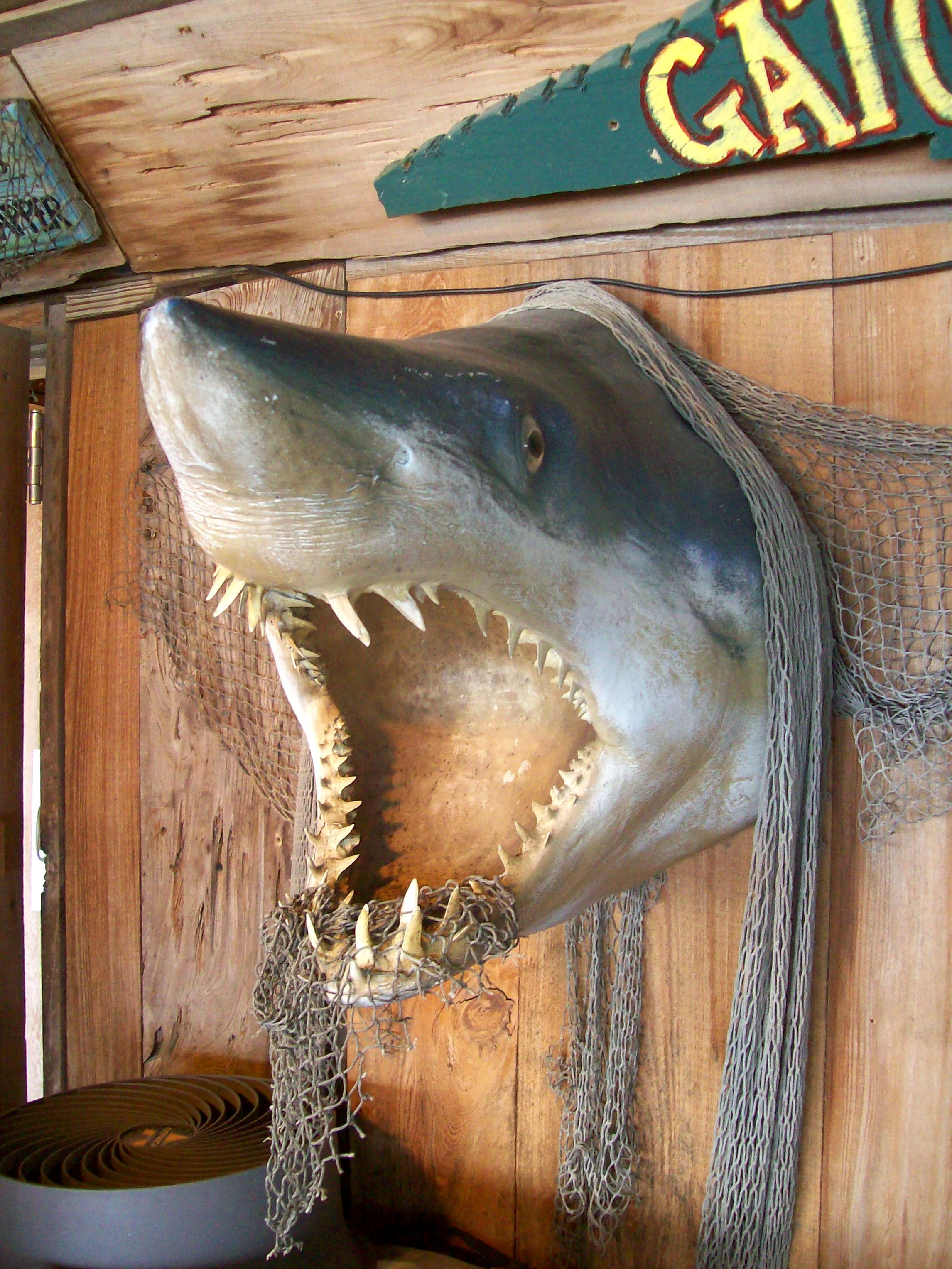 Shark decoration